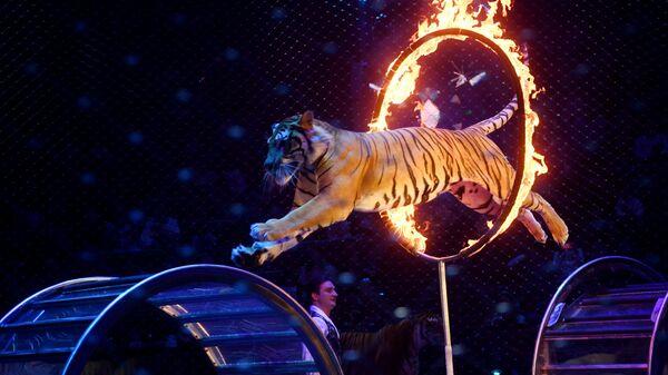 Большой московский цирк возобновляет работу