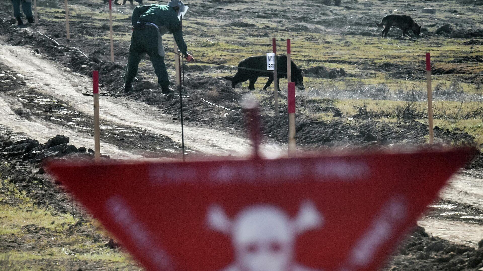 Специалисты Национального агентства по очистке от мин территорий Азербайджана (ANAMA) со служебными собаками на месте разминирования - РИА Новости, 1920, 16.05.2021