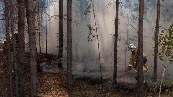 Сотрудник противопожарной службы МЧС РФ тушит лесной пожар в Тюменской области
