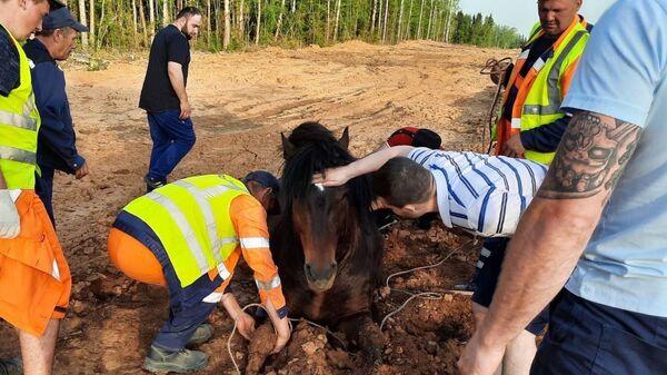 Лошадь застряла в глине на трассе Березники-Соликамск в Пермском крае