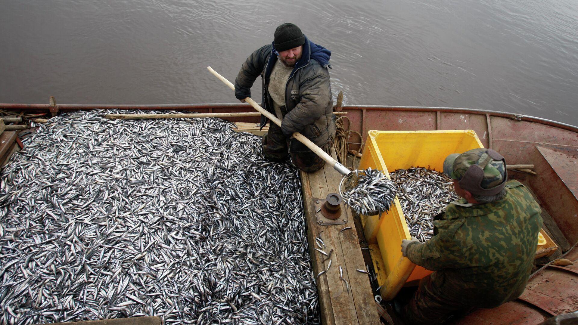 Рыбаки перегружают выловленную корюшку в ящик для дальнейшей транспортировки - РИА Новости, 1920, 17.06.2021