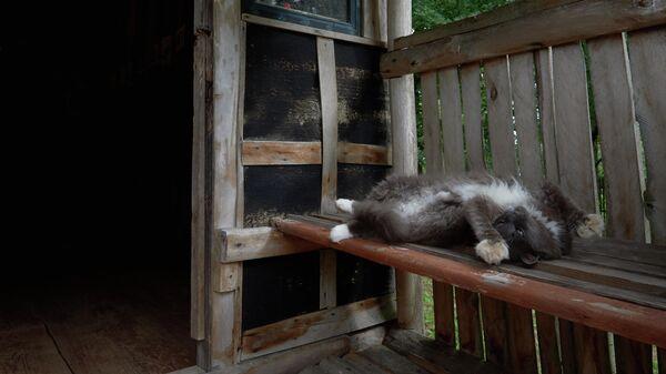 Кошка у входа в дом-музей Сергея Довлатова в деревне Березино