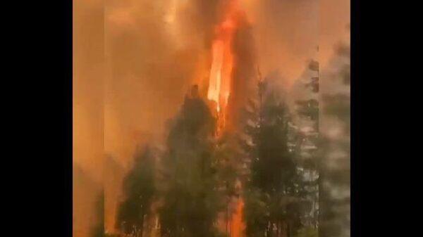 Верховой лесной пожар в Горном районе Якутии