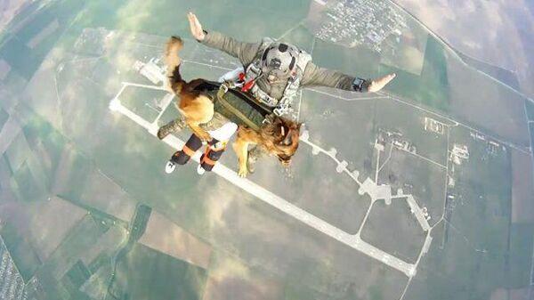 Прыжок с собакой: испытания парашютной системы десантирования