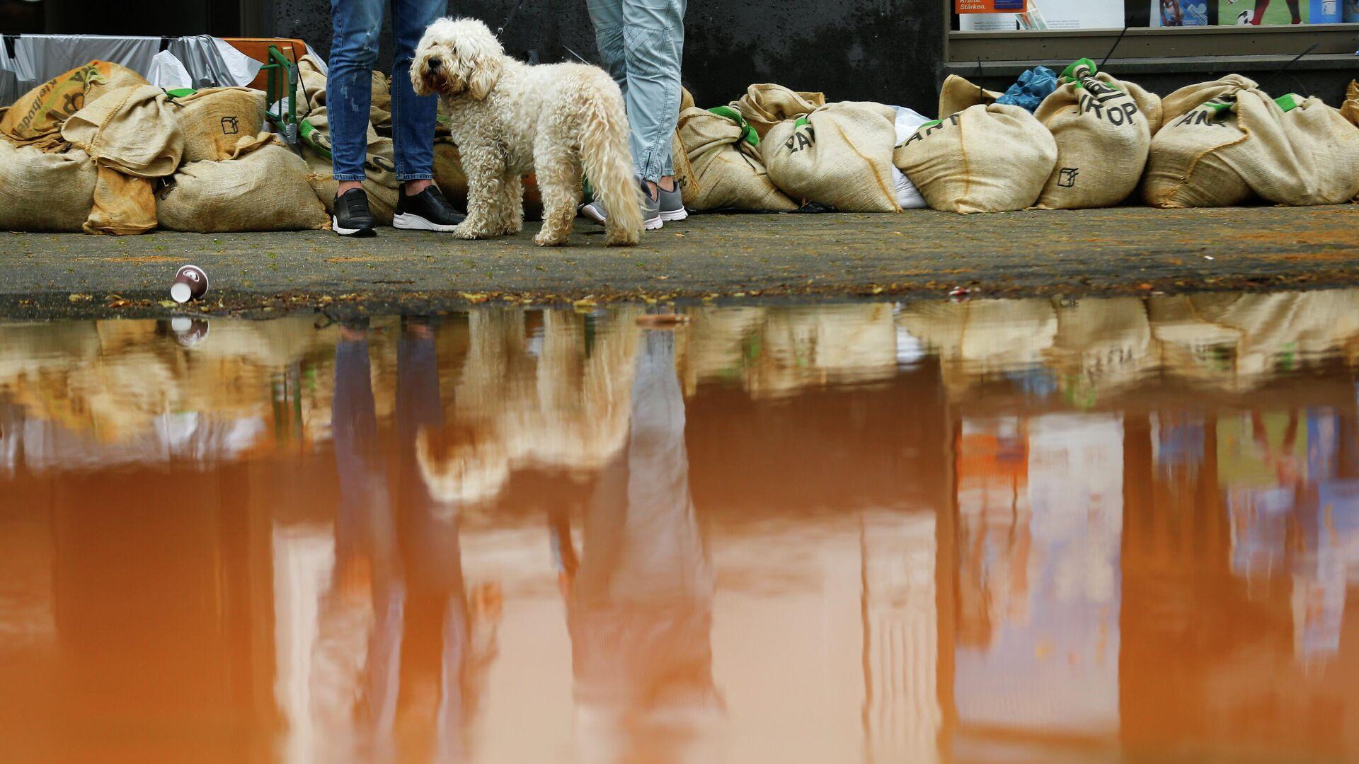 Собака стоит рядом с мешками с песком на затопленной улице после проливных дождей в Эрфтштадте, Германия - РИА Новости, 1920, 21.07.2021