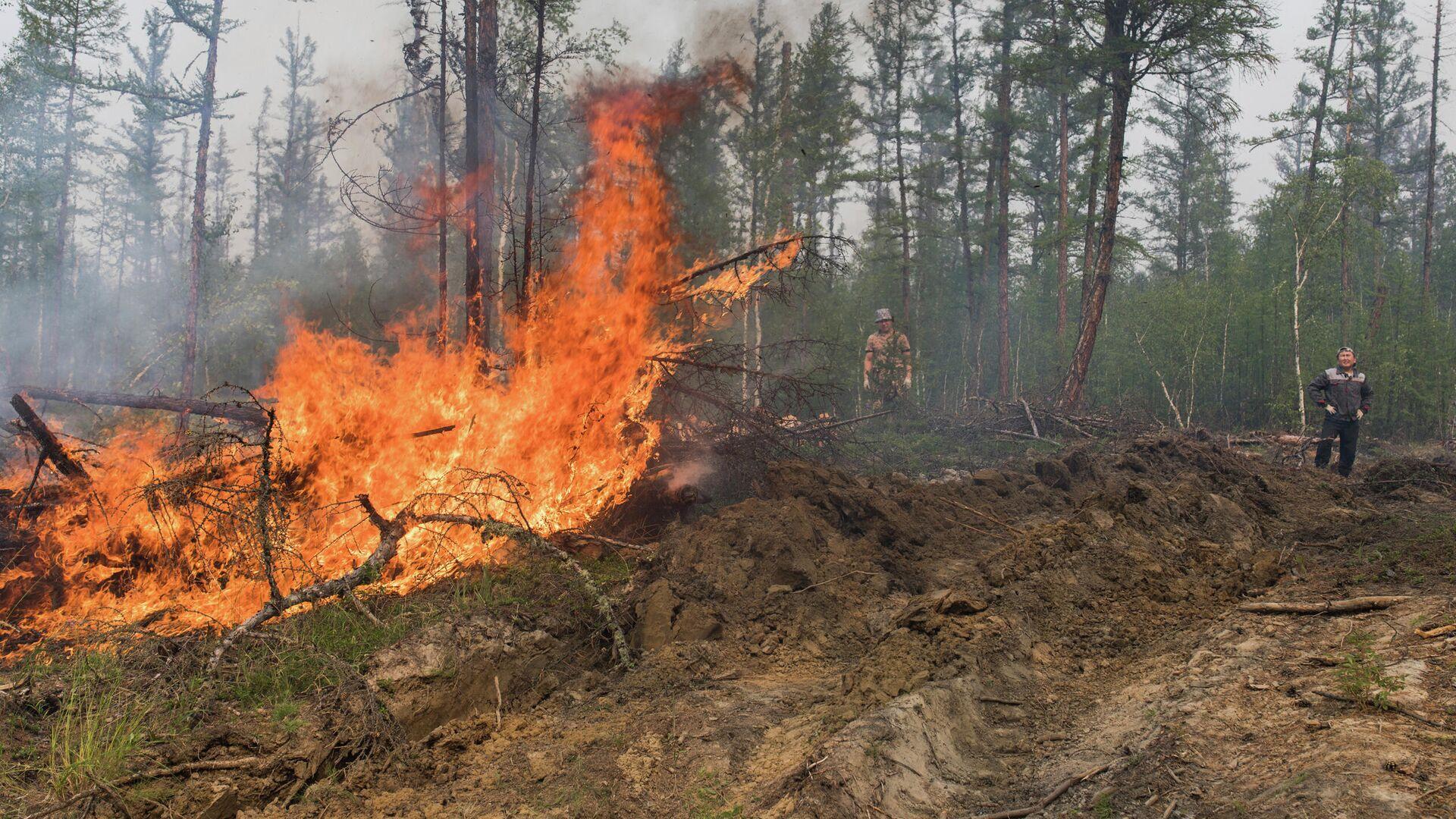 Лесной пожар в Якутии - РИА Новости, 1920, 01.08.2021