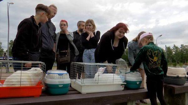 Спасти подопытного кролика: 48 лабораторных животных ищут новый дом