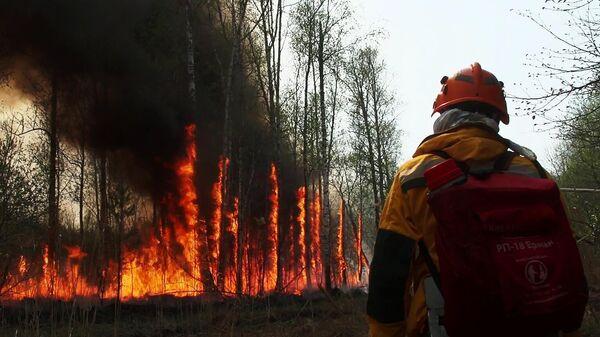 Тушение лесных пожаров в Якутии. Кадр видео