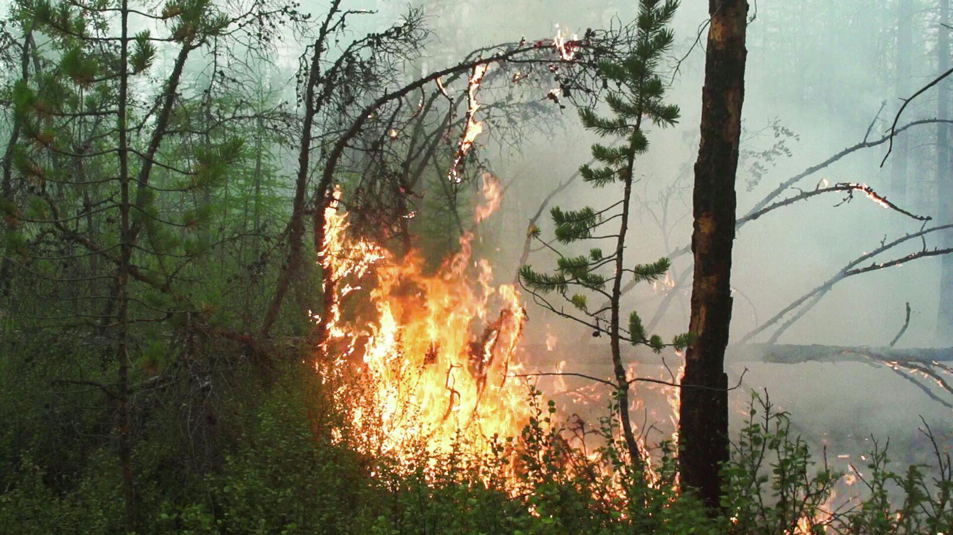 Лесной пожар в Якутии - РИА Новости, 1920, 05.08.2021