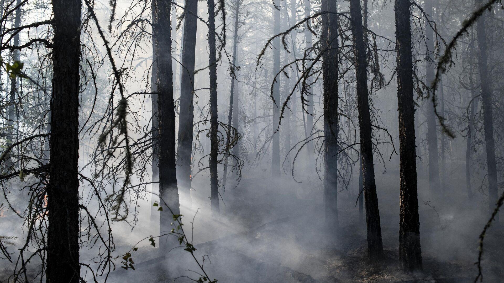 Лесной пожар в районе Хангаласский улус в Якутии - РИА Новости, 1920, 11.08.2021