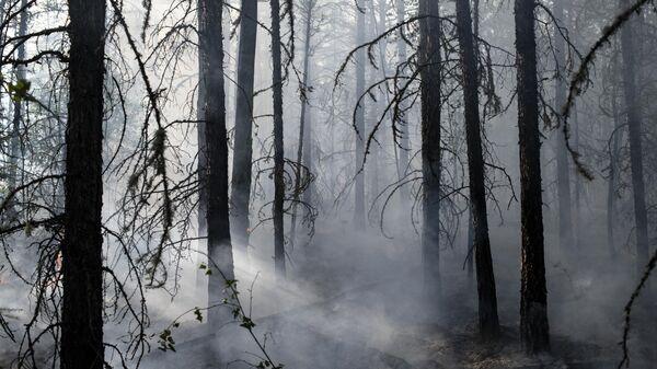 Лесной пожар в районе Хангаласский улус в Якутии
