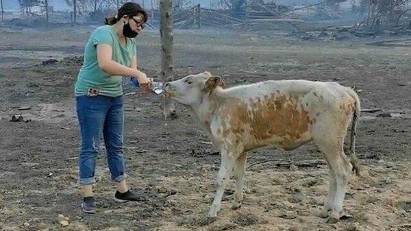 Жертвы огня: волонтеры спасают животных из горящих сел Якутии