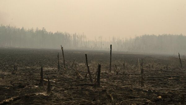 Последствия лесного пожара у поселка Ергёлёк Намского района Республики Якутия