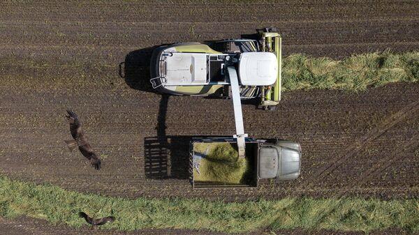Уборка кормовых культур для приготовления сенажа на полях
