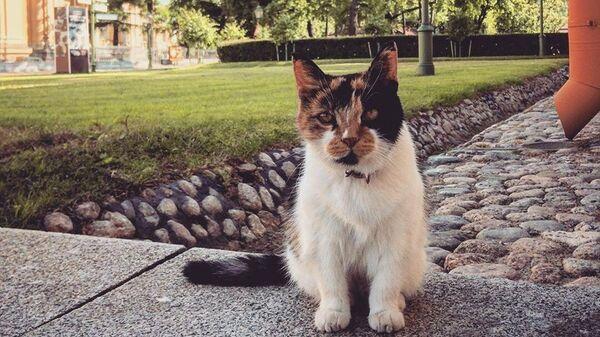 Кошка Петропавловской крепости Капитолина
