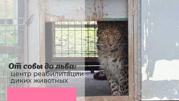 От совы до льва: центр реабилитации диких животных