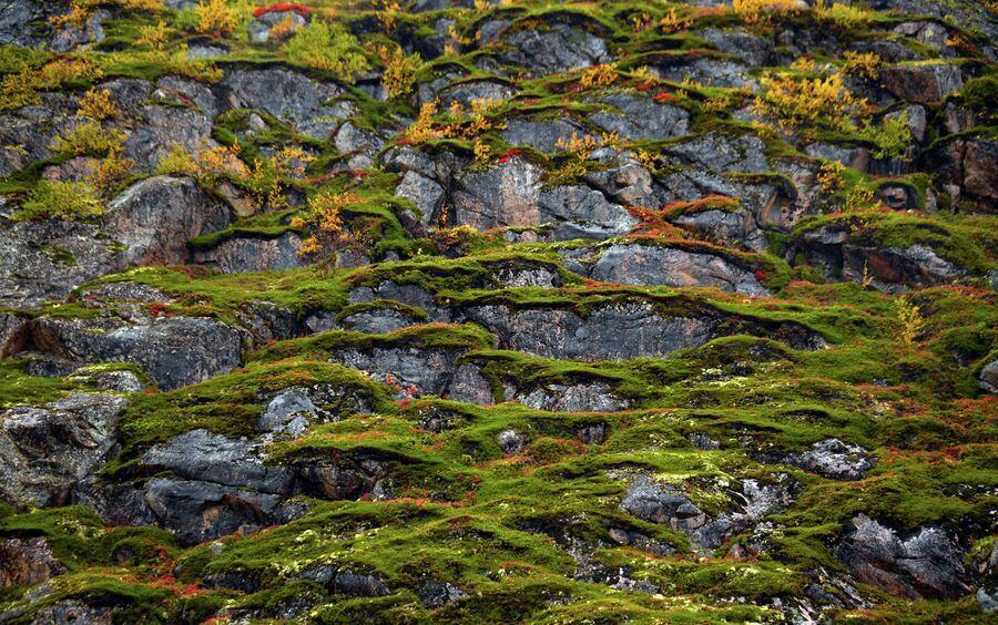 Скалы, покрытые мхом, в тундре