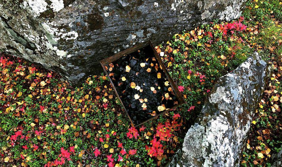 В сентябре тундра окрашивается в яркие цвета, но осень может быстро перейти в зиму