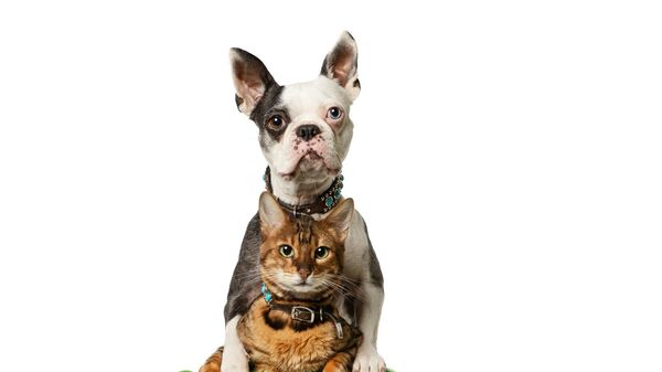 Собака и кошка вошли в книгу рекордов Гиннесса, прокатившись на самокате