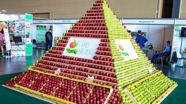 Темрезов: в рамках возрождения садоводства в КЧР собрано 2 тысяч тонн яблок