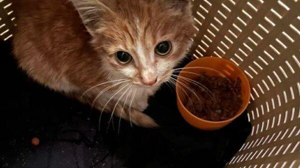 Семья из Ленобласти нашла котенка в унитазе