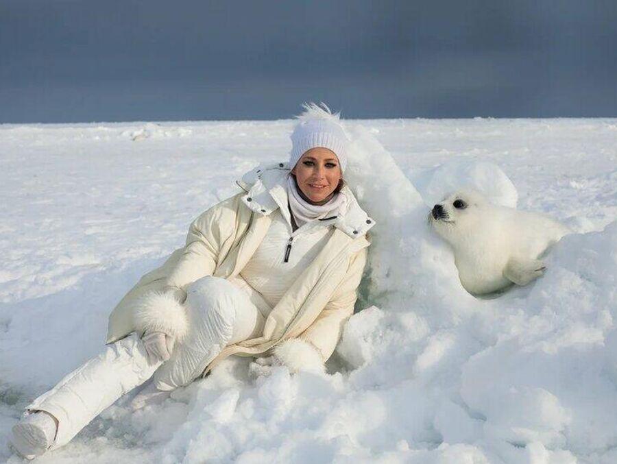 Белое море. Белек (детеныш гренландского тюленя)