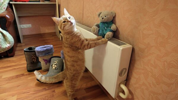 Кот в квартире жилого дома