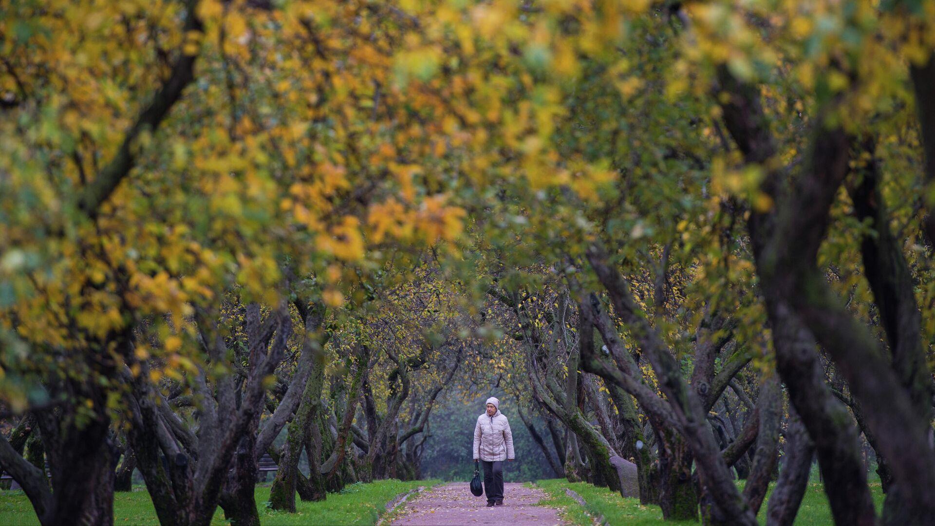 Женщина гуляет по яблоневому саду - РИА Новости, 1920, 27.09.2021