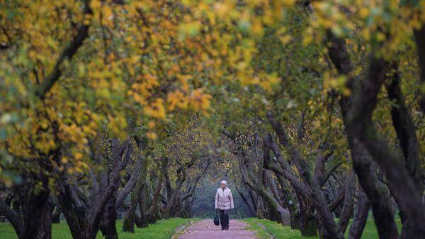 Женщина гуляет по яблоневому саду