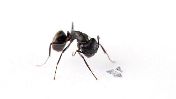 Летающий микрочип рядом с обыкновенным муравьем (для масштаба)