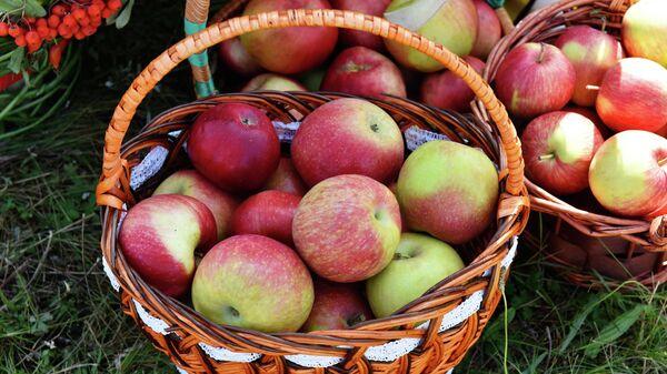Яблоки в корзинке на ярмарке