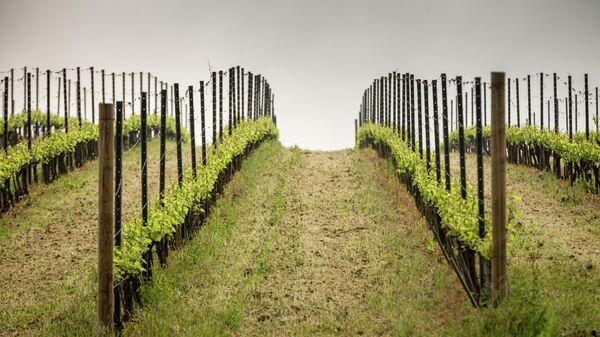 Винодельческое хозяйство Долина Лефкадия