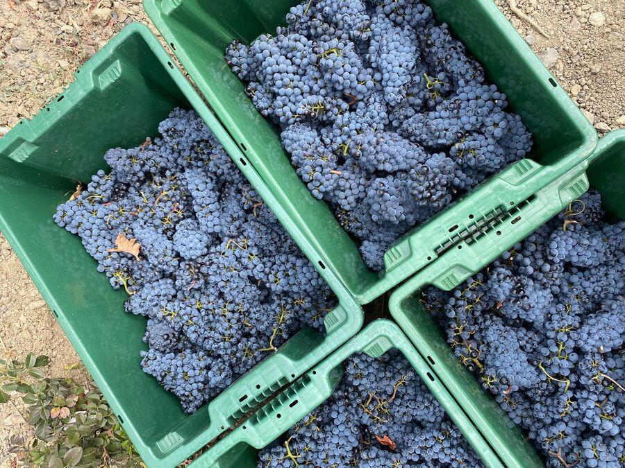 Винодельня Winepark в Крыму