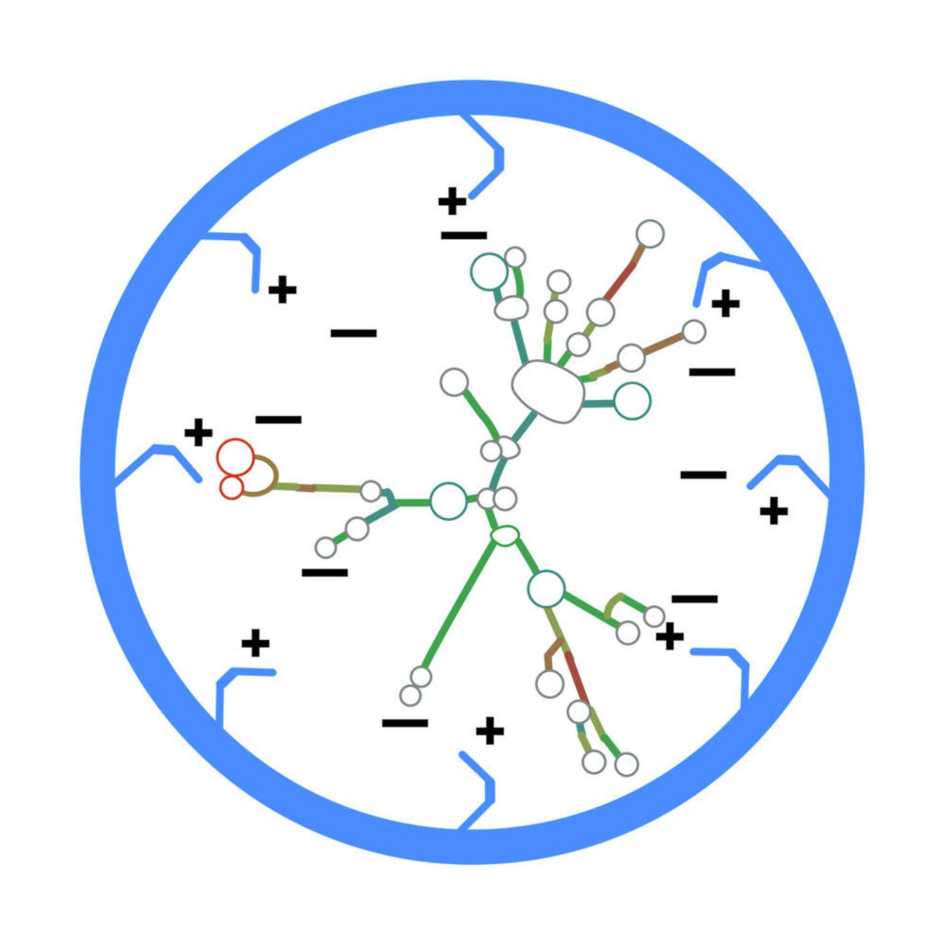 Молекула мРНК в оболочке из спермидина-полиглюкина - РИА Новости, 1920, 08.10.2021