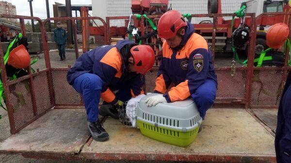 Спасение кошек из дома в Ногинске, где произошел взрыв бытового газа