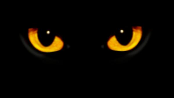 Трейлер подкаста Кот ученый