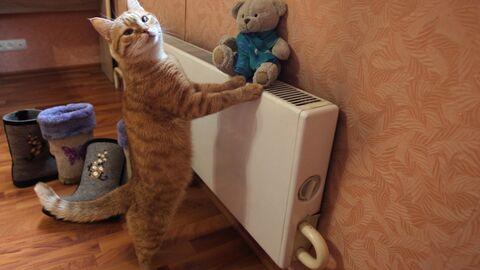 Кот в квартире жилого дома в Москве