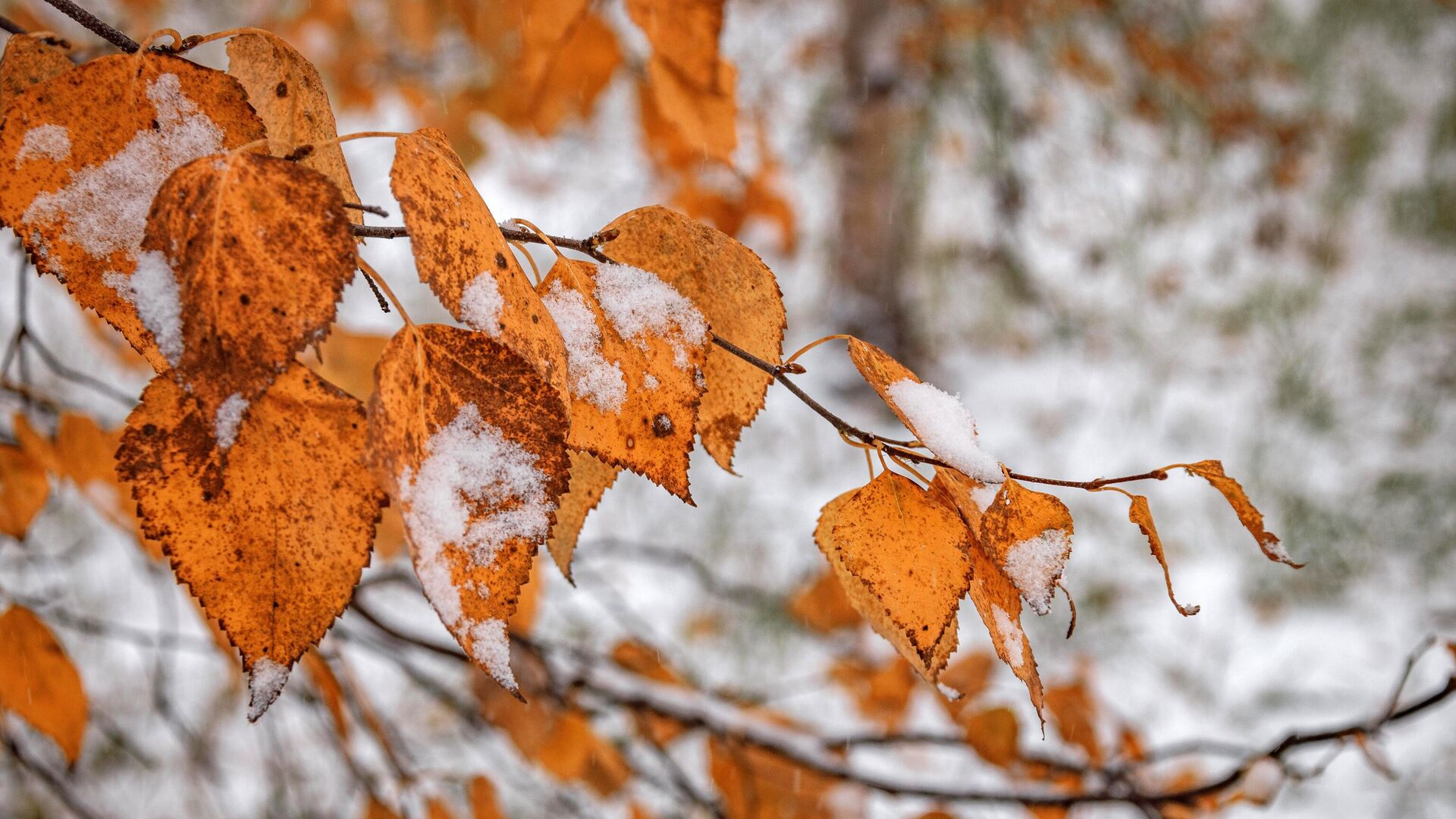Деревья во время снегопада - РИА Новости, 1920, 30.09.2021