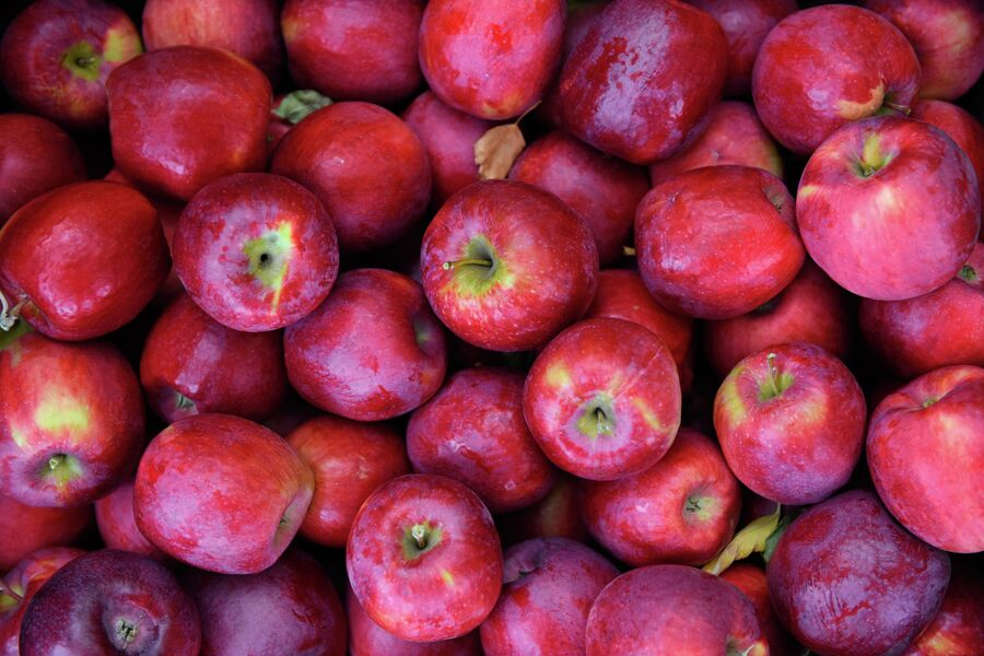 Сбор урожая в яблоневых садах в Хвалынском районе Саратовской области