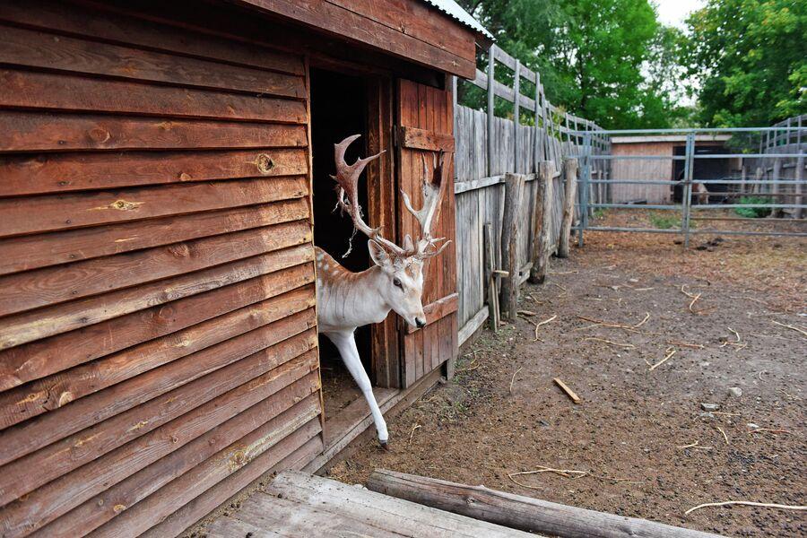 Вольерное хозяйство Теремок на территории национального парка Хвалынский в Саратовской области