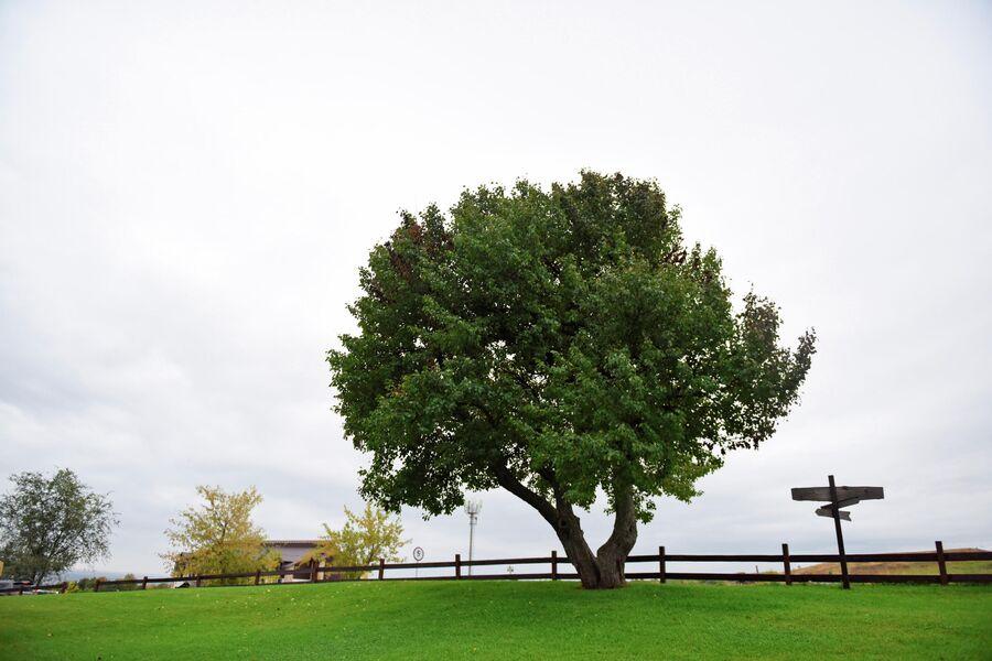 Парк отдыха Хвалынь в Саратовской области