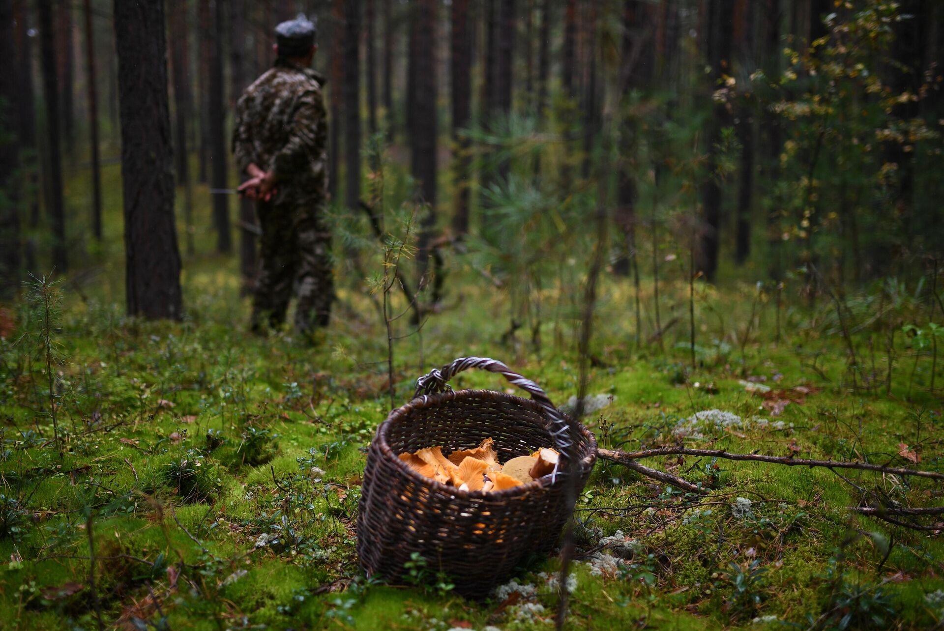Житель села Юрт-Акбалык собирает грибы в лесу - РИА Новости, 1920, 30.09.2021