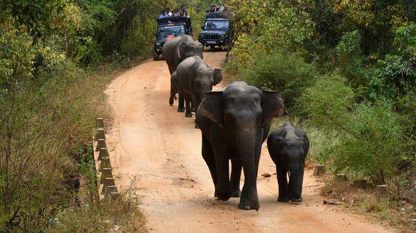 Туристы наблюдают за слонами в национальном парке Миннерия