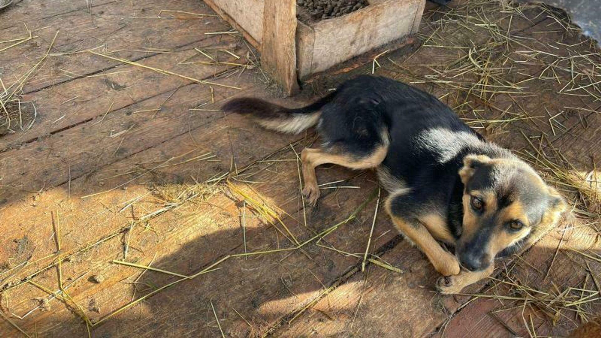 Собака в приюте Лохматая душа, где произошло отравление - РИА Новости, 1920, 03.10.2021