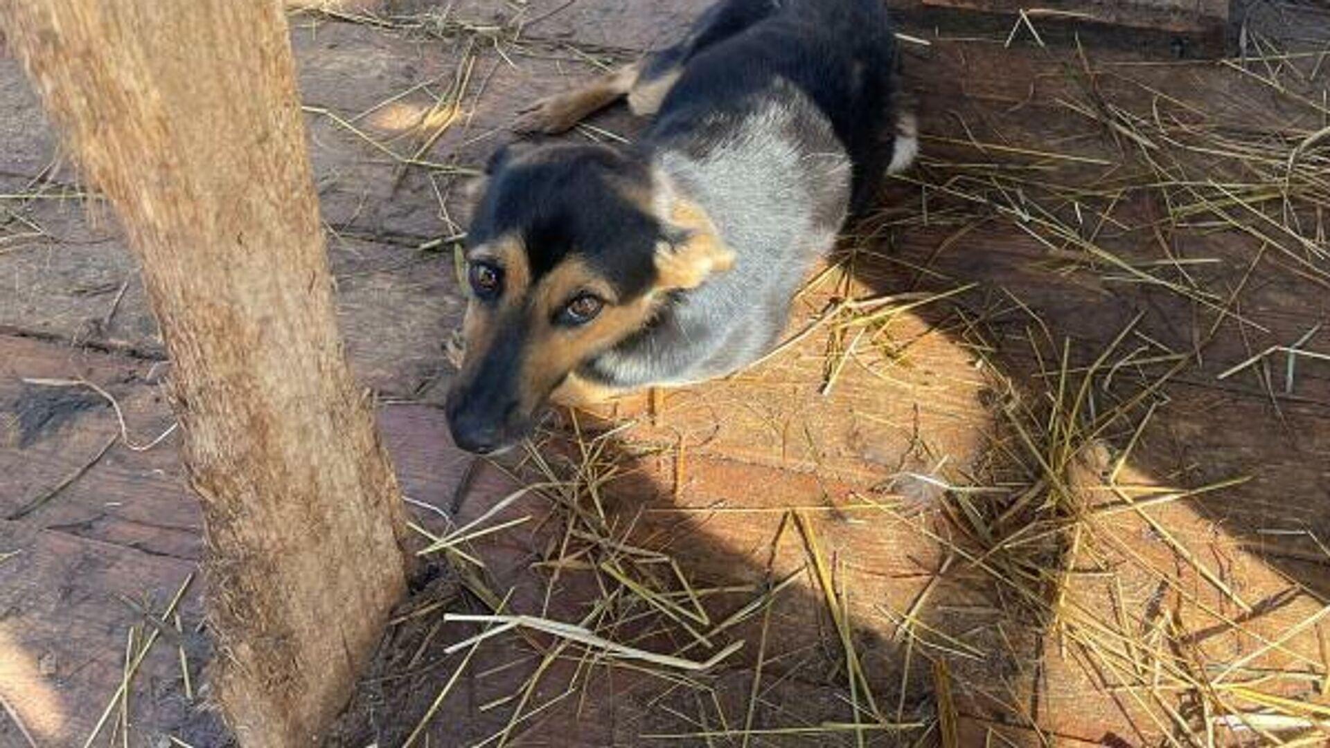 В Казани бродячая собака покусала мальчика