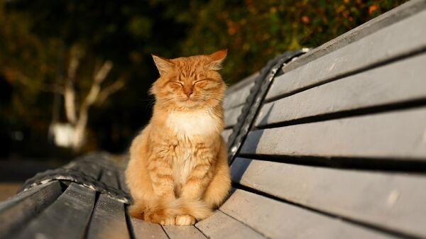 Кот вблизи Новодевичьего монастыря в Москве
