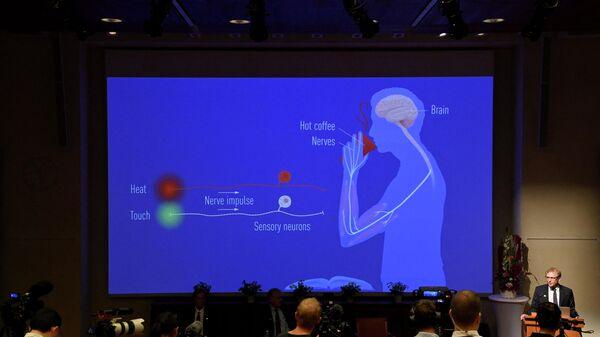 Объяснение сферы исследований лауреатов Нобелевской премии 2021 года по физиологии и медицине Дэвида Юлиуса и Ардема Патапутяна во время пресс-конференции в Каролинском институте в Стокгольме