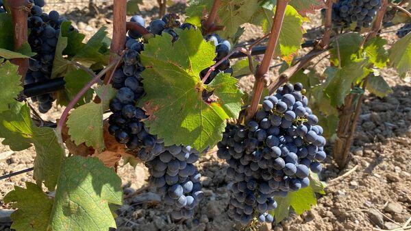 Лозы. Центр винного туризма Winepark
