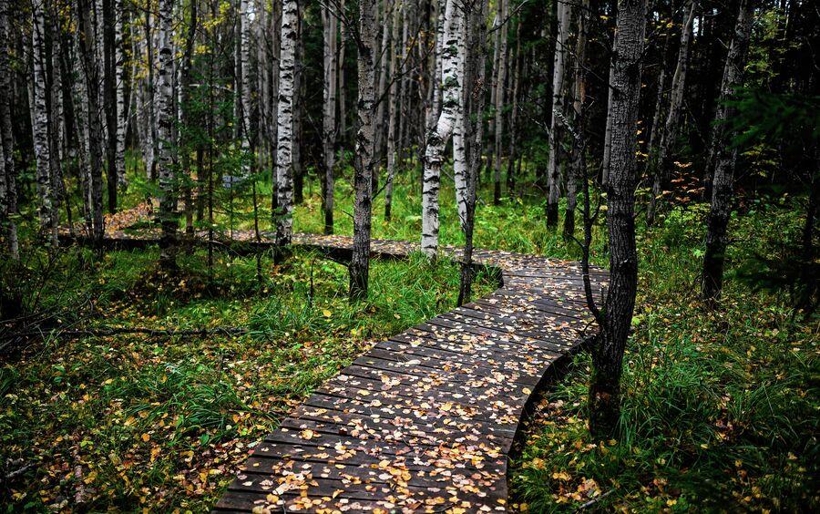 Экологическая тропа эколого-туристского комплекса Веселые горы, Свердловская область. Октябрь 2020 года