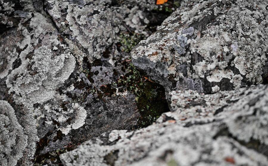 Лишайник на скалах Уральских гор. Свердловская область